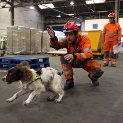 search and rescue dog training  news  fired up corporation